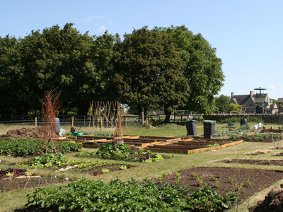 Filkins Allotments